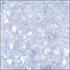 Celestial Pearl (Code: K3-8346)