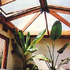 Sun room with roof windows